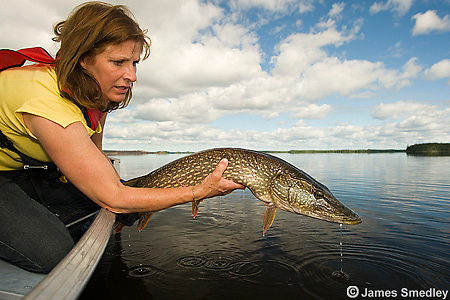 Woman releasing a huge northern pike