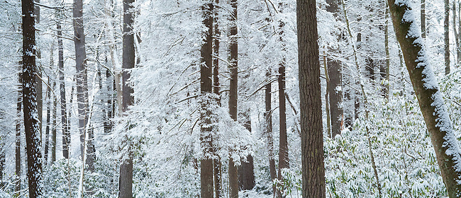 Winters forest, Linville Gorge Wilderness, Pisgah National Forest