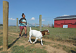 Sara Goitom, a resettled refugee from Eritrea, runs with a goat on a farm in Linville, Virginia, on July 17, 2017. She and other resettled youth are preparing to show sheep and goats in a county fair. Their families were resettled in the Harrisonburg, Virginia, area by Church World Service. <br /> <br /> Photo by Paul Jeffrey for Church World Service.