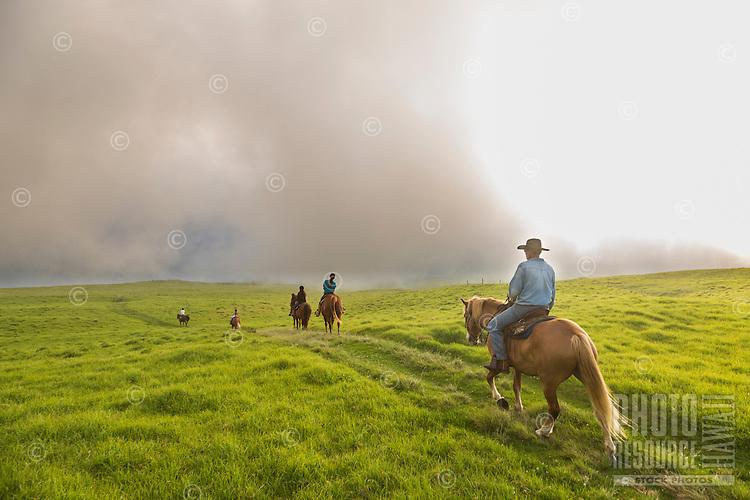 A Paniolo Adventures guide takes visitors horseback riding over the mystical hills of Kohala, Hawai'i Island. This part of Kohala is in Waimea, near sunset.