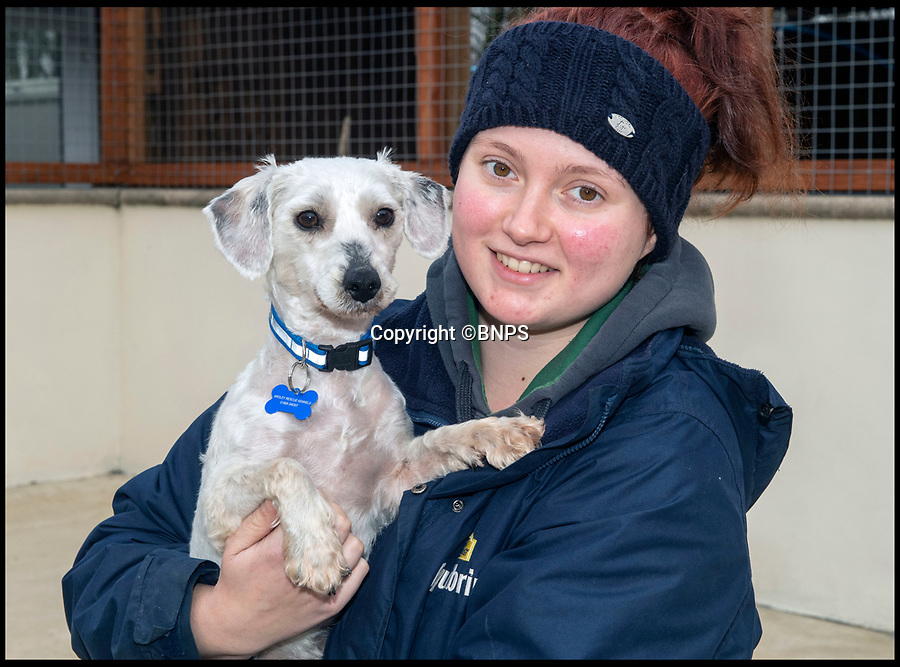 BNPS.co.uk (01202 558833)<br /> Pic: PhilYeomans/BNPS<br /> <br /> Rescue centre worker Alice Walker with Douglas.<br /> <br /> Douglas the Bichon Free-ze is looking for a warm home...<br /> <br /> Drastic action had to be taken to help save Douglas the Bichon Frise after the unfortunate pooch was found abandoned on New Years day with a heavily matted coat.<br /> <br /> Staff at Ardley Rescue had to shear off all his unkempt fur leaving Douglas shivering and shorn and now looking for a warm home to look after him.<br /> <br /> The dog was in such a sad state that staff at the Rescue Kennels, in Bicester, Oxon, were not sure what breed he was until they removed his mass of matted fur<br /> <br /> Douglas now has to wear a jumper and a coat to keep him warm until his fur grows back.