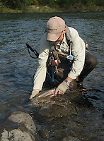 Mann setter ut regnbueørret ---- Man releasing rainbow trout