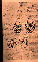 Visual Arts:  Leonardo Drawings--Fetuses in Uterus.  Photo '84.