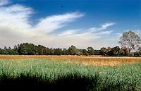 Milano, località di Figino, periferia nord - ovest. Parco Agricolo Sud --- Milan, locality of Figino, north - west periphery. Rural Park South