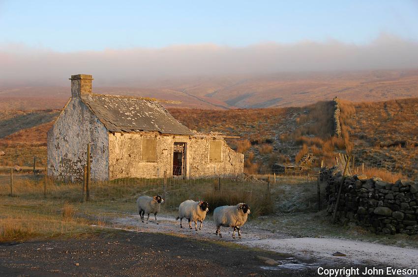Derelict shepherd's hut, Ribble Head, North Yorkshire...Copyright John Eveson 01995 61280.j.r.eveson@btinternet.com