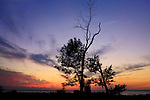 Trees In Silhouette Against A Colorful Sunset Over Lake Erie At The Mouth Of Crooked Creek, Dunkirk New York, USA