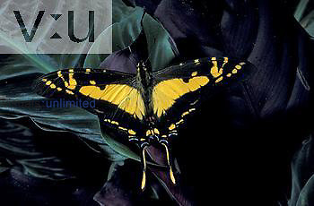 Long-tailed Swallowtail ,Eurytides thyastes, Papilionidae, Panama