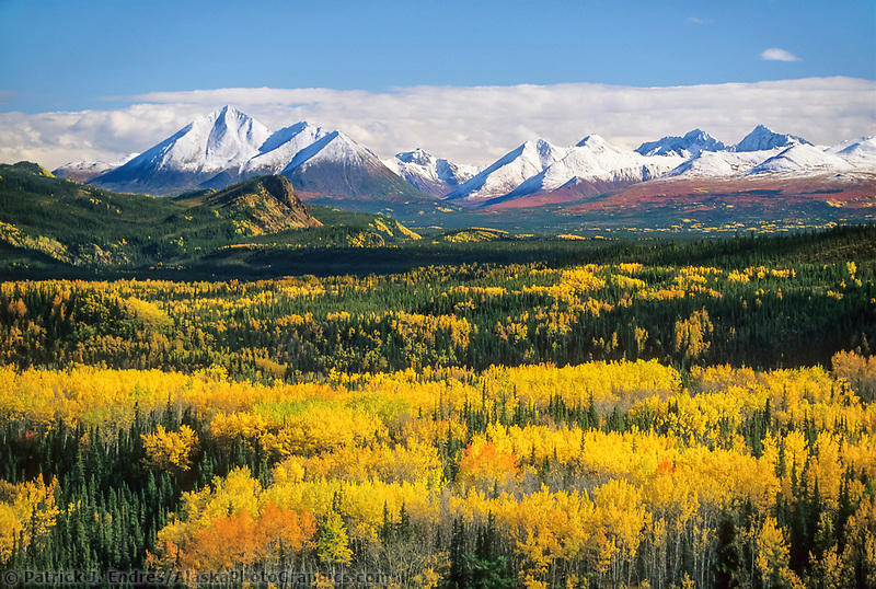 Fresh snow on Alaska range mountains, birch, aspen trees, Denali National Park, Alaska