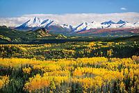 Fresh snow on Alaska Range mountains, birch, aspen trees, Denali National Park, Alaska