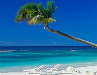 Antigua, West Indies<br /> Palm tree extends over white sand beach and two beach chairs at Long Bay -<br /> Caribbean Islands