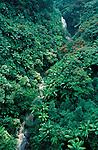 Waterfall in Jungle, Kauai Island, Hawaii, green treetops, .USA....
