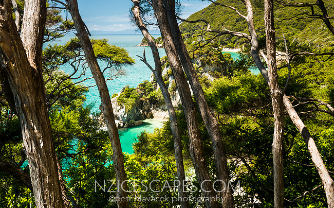 Anapai Bay as seen through native kanuka bush on Abel Tasman Coast Track, Abel Tasman National Park, Nelson Region, South Island, New Zealand