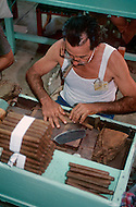 Cuba, March 1992: A  Torcedor (cigar roller), rolling cigars in La Corona, The largest Cigar factory in Havana. A Torcedor in his life learns how to roll one to maximum three different size of cigars. The fastest Torcedores can roll upto 110 cigars per day.