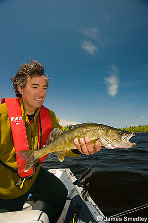 Angler holding a summer walleye in his fishing boat.