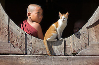 Myanmar, (Burma), Shan State, Nyaung Shwe: Student monk and cat at the Shwe Yan Pyay monastery | Myanmar (Birma), Shan Staat, Nyaung Shwe: junger Moench und Katze im Shwe Yan Pyay Kloster
