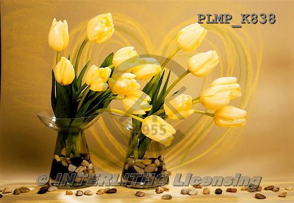 Marek, FLOWERS, BLUMEN, FLORES, photos+++++,PLMPK838,#f#