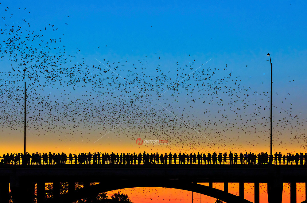 When is the last time you saw the bats in Austin emerge at dusk? The huge crowds that assemble downtown to watch these winged mammals head out to get their dinners are one Austin's best arguments that we're still keeping it weird. You probably already know that the 1.5 million Mexican free-tailed bats that roost under the Ann W. Richards Congress Avenue Bridge comprise the largest urban bat colony in the world.
