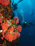 Qixingyan ('Seven Star Rock'), Taiwan -- Divers near a deep sea wall.