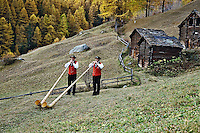 Father and son Alp Horn players and autumn Larch trees, Zermatt, Switzerland.