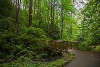 The Lower Macleay trail in Forest Park, Portland Oregon