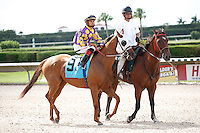 Redbud Road on post parade for The Azalea Stakes (G3), Calder Race Course, Miami Gardens Florida. 07-07-2012.  Arron Haggart/Eclipse Sportswire.