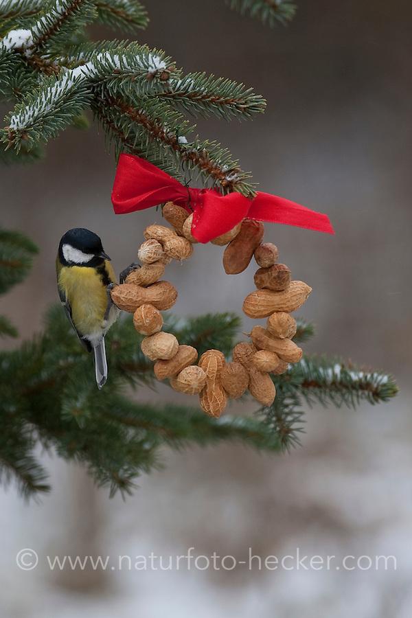 Kohlmeise, Kohl-Meise, Meise, an der Vogelfütterung, Fütterung im Winter bei Schnee, am Nuss-Ring, Nusssring, selbstgebasteltes Vogelfutter, Erdnüsse, Winterfütterung, Parus major, great tit