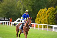 during Evening Racing at Salisbury Racecourse on 3rd September 2019
