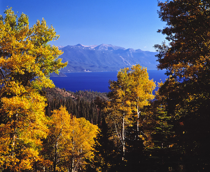 Lake Tahoe Scenic Fall Colors on Aspens