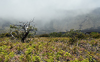 Wilderness landscape of the crater in HALEAKALA NATIONAL PARK on Maui in Hawaii