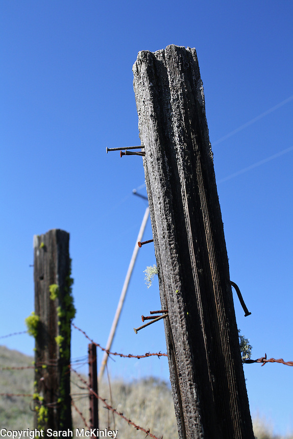 Several rusted nails stick out from an old, gray, weathered fence post along Orr Springs Road above Ukiah in Mendocino County in Northern California.