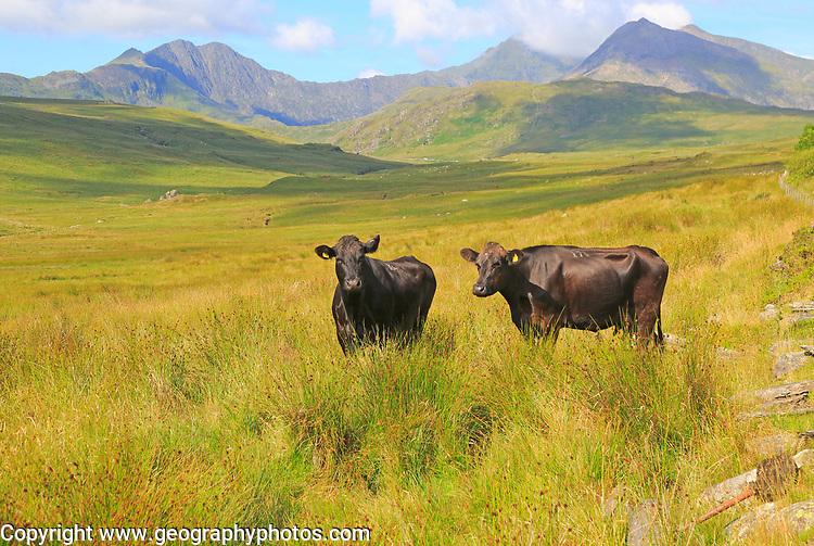 Mount Snowdon landscape view west from Nantygwryd valley, Gwynedd, Snowdonia, north Wales, UK