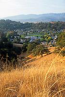 Dry summer grasses in wildlands next to city -Novato, California hillside (brown)