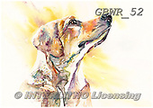 Simon, REALISTIC ANIMALS, REALISTISCHE TIERE, ANIMALES REALISTICOS, paintings+++++LizC_Labrador,GBWR52,#a#, EVERYDAY