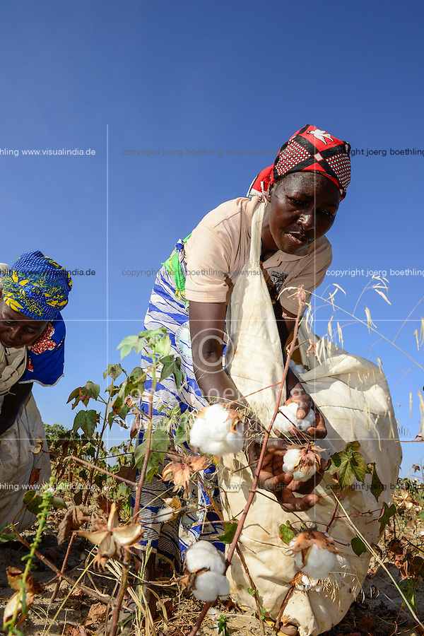 BURKINA FASO, village GOUMSIN near SAPONE, organic and fair trade cotton farming, manual harvest at farm, woman farmer / fair gehandelte Biobaumwolle, Frauen bei der manuellen Ernte