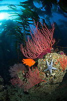 California marine life photos
