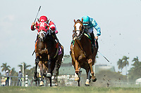 HALLANDALE BEACH, FL - FEBRUARY 04:  Kitten's Cat (red and white silks) gets to the wire first over Clyde's Image in the Kitten's Joy Stakes at Gulfstream Park. (Photo by Arron Haggart/Eclipse Sportswire/Getty Images)