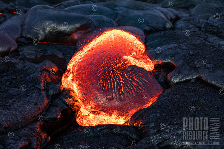 Molten lava creates shapes like this one resembling a sea shell, seen on the coastal plains of Pulama Pali, Hawai'i Volcanoes National Park, Puna, Hawai'i Island, January 2018.