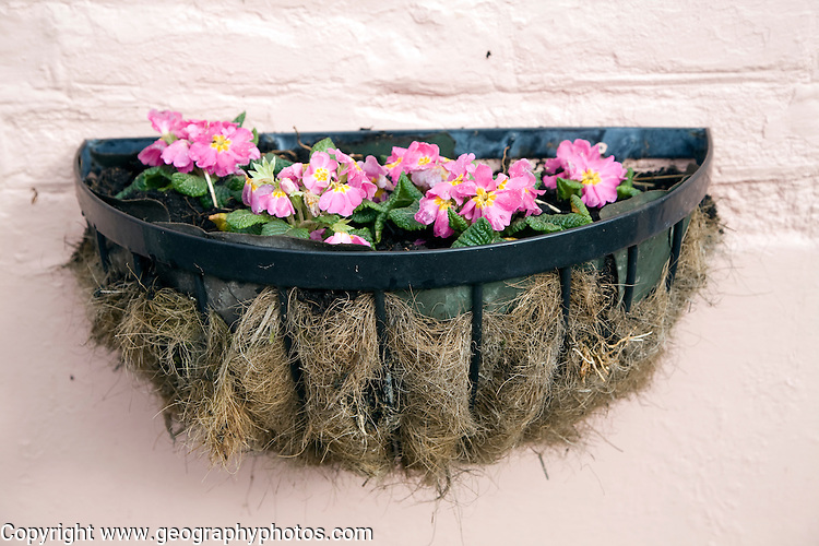 Hanging basket of plants on wall