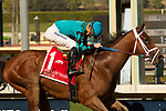 ARCADIA, CA  FEBRUARY 3 :  #1 Roy H, ridden by Kent Desormeaux, canters home to win the Palos Verdes Stakes (Grade ll) on February 3, 2018, at Santa Anita Park in Arcadia, CA.(Photo by Casey Phillips/ Eclipse Sportswire/ Getty Images)