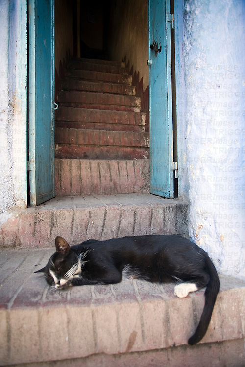 Sleepy cat at a house's door, Chefchaouen, Morocco