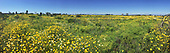 Ballona Wetlands with wildflowers, Playa Del Rey, Los Angeles, California, USA