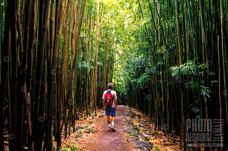 Hiking through bamboo forest in Haleakala National Park, Kipahulu, Maui.