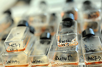 Cloned cell lines that are growing in Guangzhou Sun Yat-Sen University (also known as Zhongshan University in manderain) Experimental Animal Lab