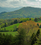 Spring, Green, East Tennessee