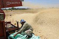 EGYPT, governate Beheira, Kafra Eldawar, farming in the Nile delta , harvest of wheat , trashing machine/ AEGYPTEN, Beheira, Landwirtschaft im Nildelta, Ernte von Weizen, Dreschmachine