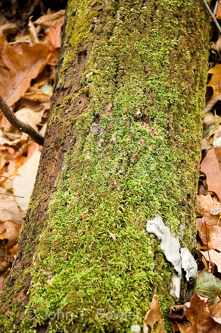 Moss covered log on forest floor