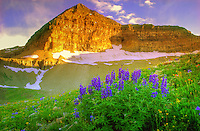 Mount Timpanpogos - Utah - summer wildflowers - Wasatch NF