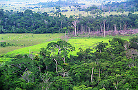 BRAZIL Amazon logging of rainforest for cultivation of sugarcane, soya or cattle breeding for meat production/ BRASILIEN  Abholzung von Regenwald fuer Anbau von sugarcane, soya or cattle breeding fuer die Fleischproduktion
