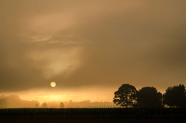 The sun sets in the west across a field of corn and a tree line in Door County, Wisconsin