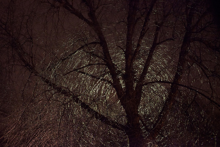 A streetlight shines on a tree after an ice storm on the Winter Solstice, December 21, 2013.